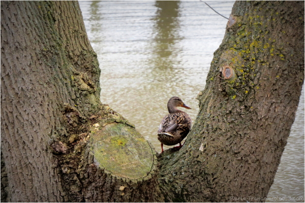 cane sur un arbre