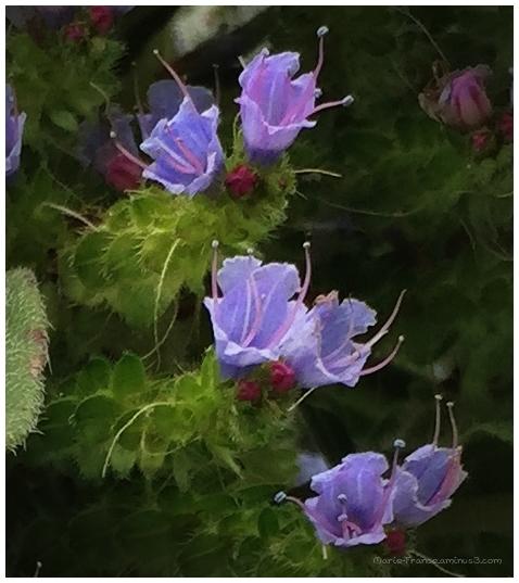 petites fleurs sur une plante en Bretagne