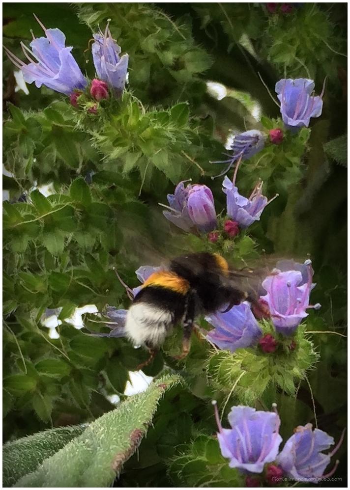 un bourdon sur une fleur