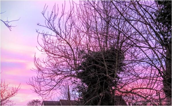 une souche sur un ciel rose...