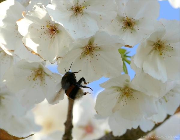 insecte dans les fleurs