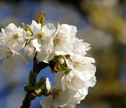 Un bout de branche : un bouquet !