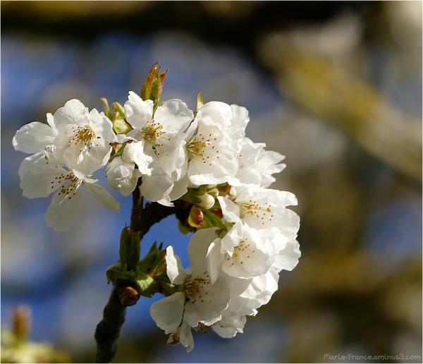 fleurs d'arbustes