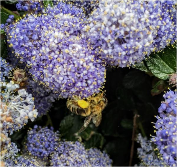 insecte dans une fleur