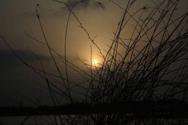 crouching tree in the burning sun