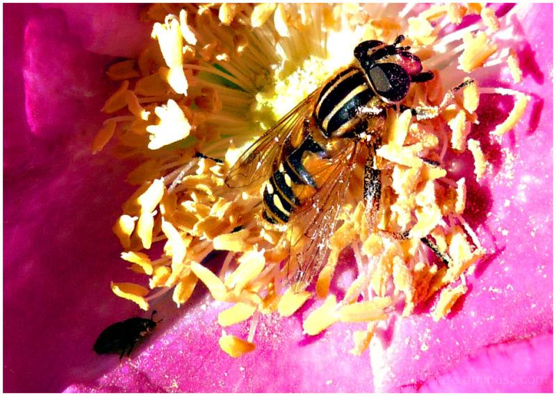 nectar bath