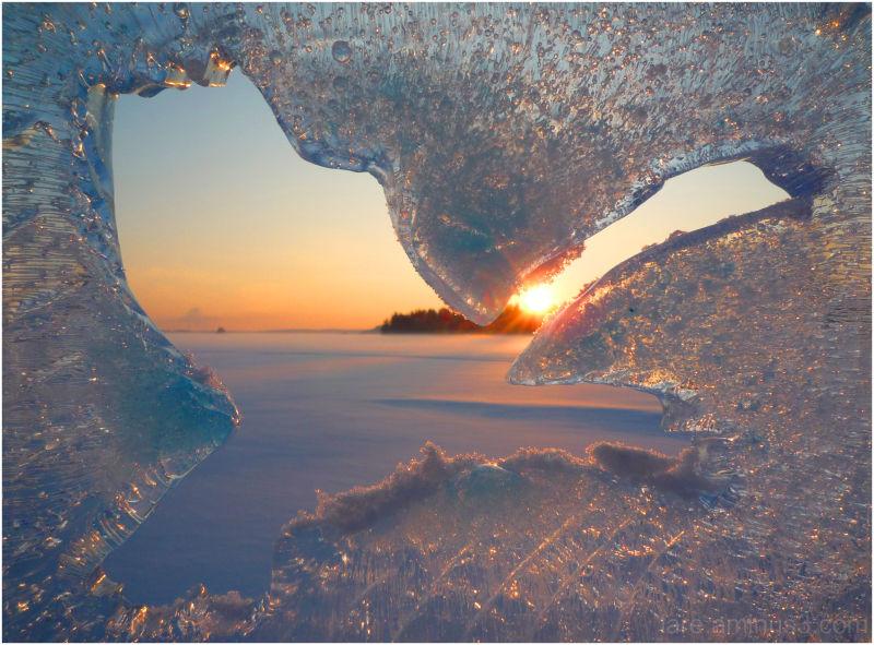 frozen 'swan lake'