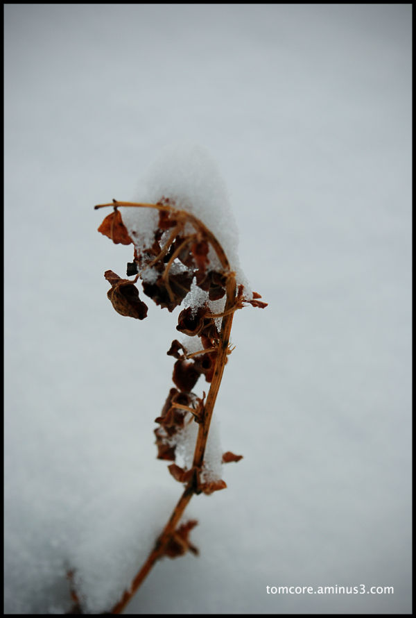 snow white plant alone dead survivor