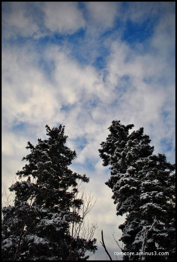 brother born tree snow winter