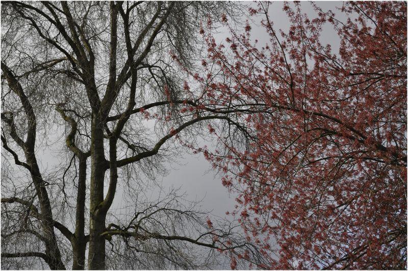 winter ... spring