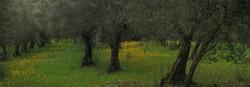 Campos de la Sierra de Aracena