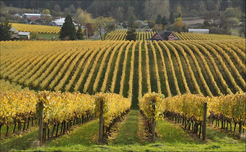 wineries in the fall