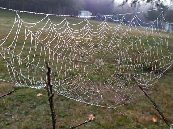 guitni's web
