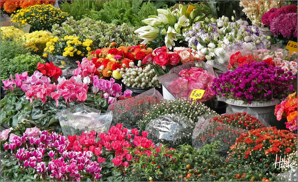 flower market in Rome
