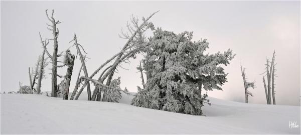 Winter on Mt. Hood