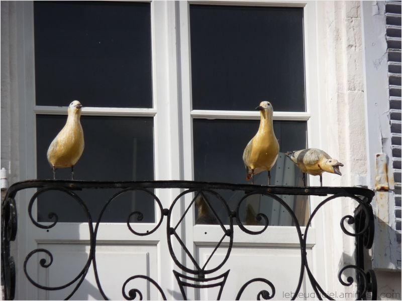 Oiseaux cancans