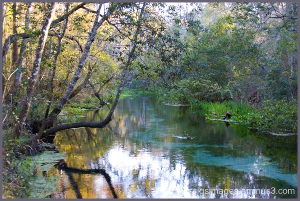 Ichetuknee Springs