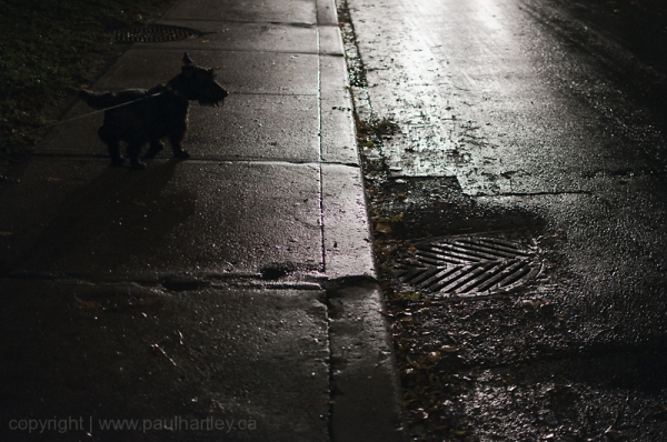 Dog on a leash on street at night