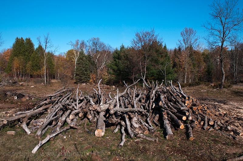 row of cut trees