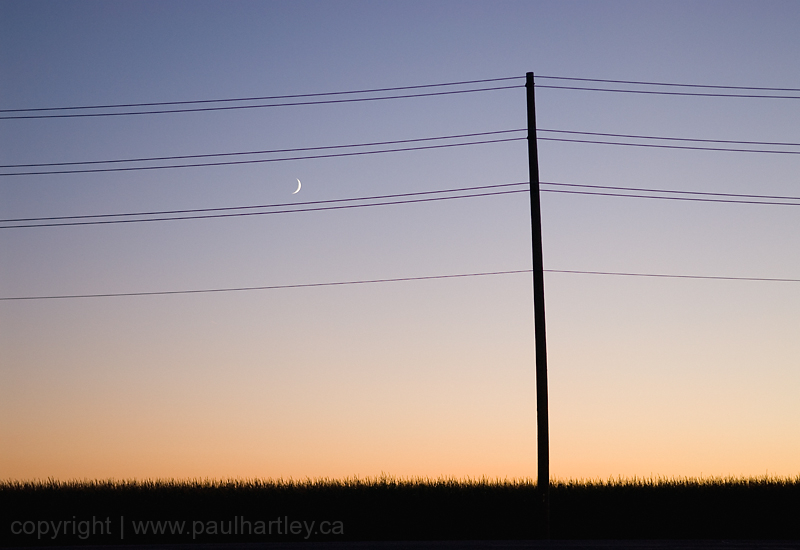 silhouette of power lines grasses with moon