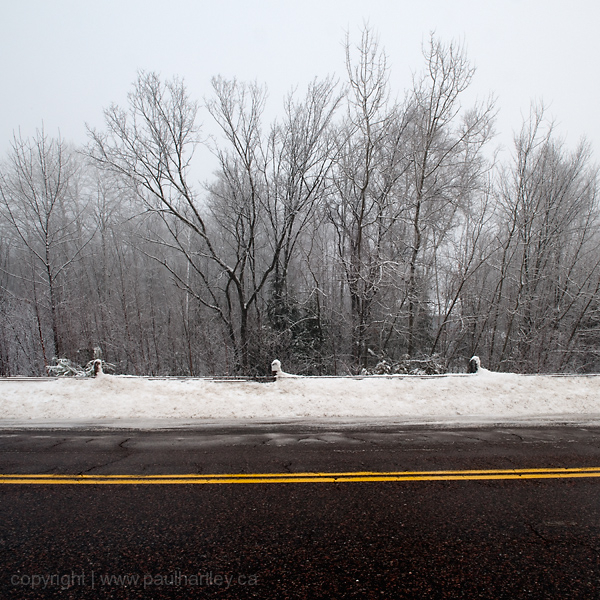 dormant frosty trees roadside highway 28 south ON