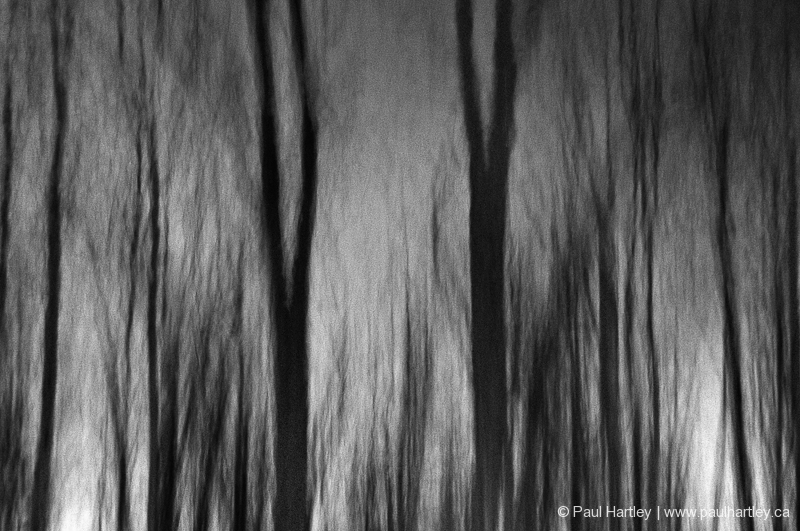 black and white forest abstract