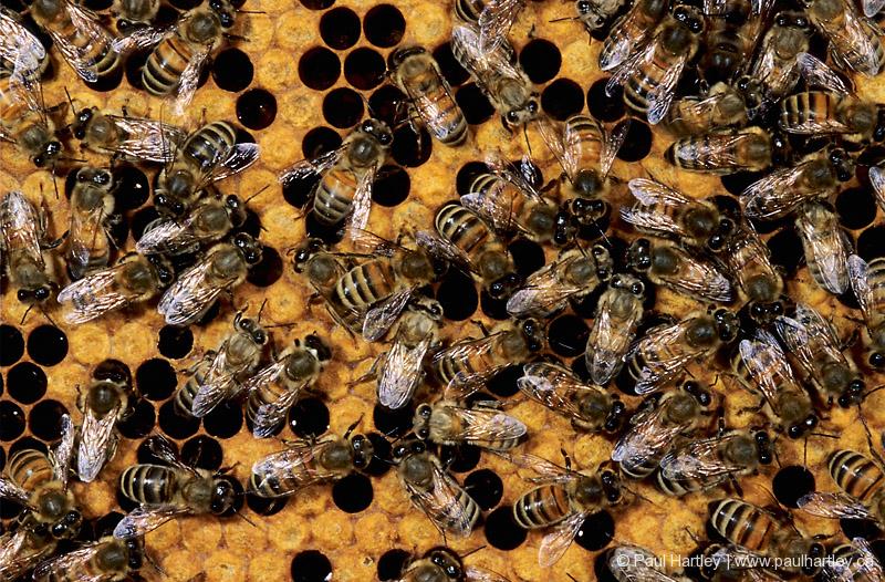 Bee Keepers Honey Bees