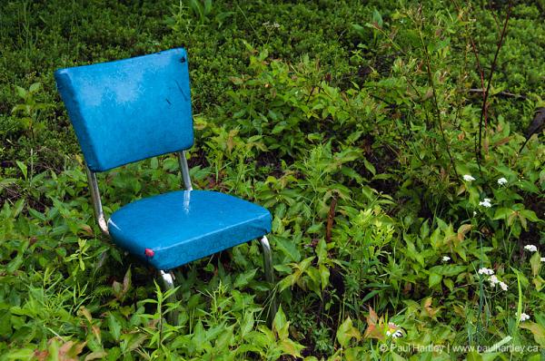 vintage blue kitchen chair amongst green foliage