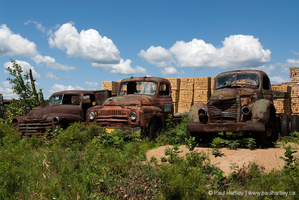 Vintage rusted trucks in lumber yard