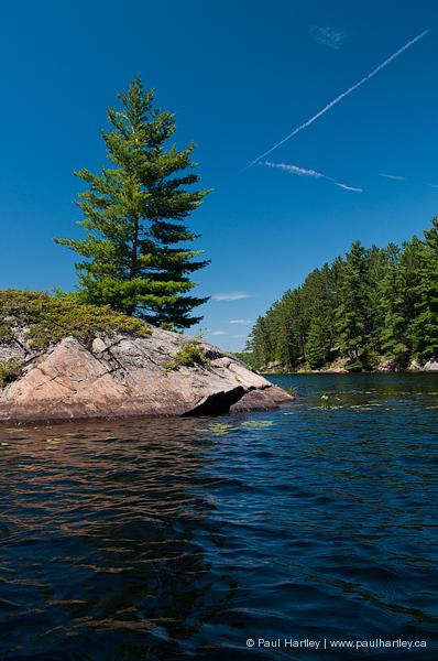 rock tree lake landscape ontario