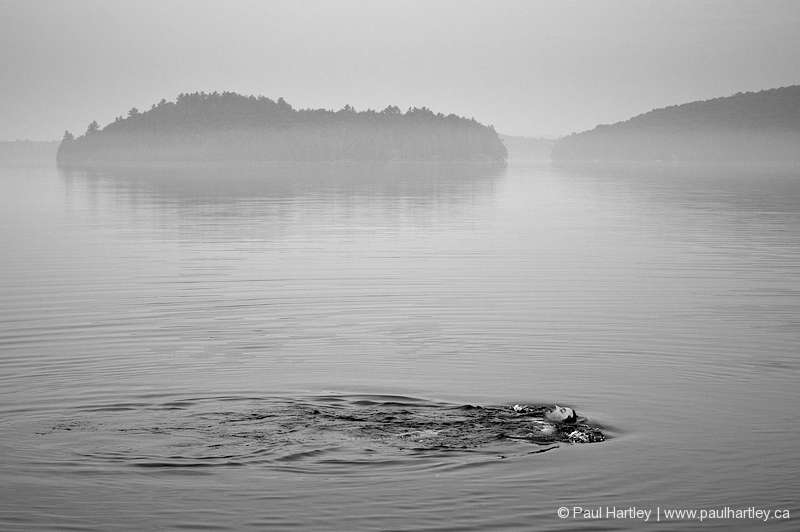 man swimming in lake with mist black and white