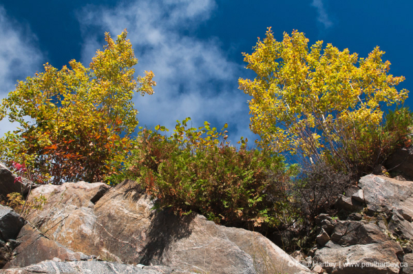 fall colour with rock base and blue sky