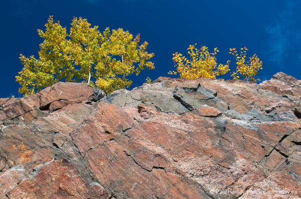 texture of rock with fall colour trees