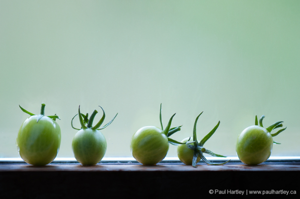 small green tomatoes on windowsill