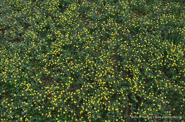 green weeds with yellow flowers