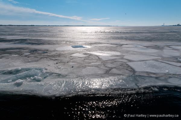 seagulls on ice lake ontario high contrast