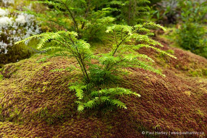 small evergreen tree on moss