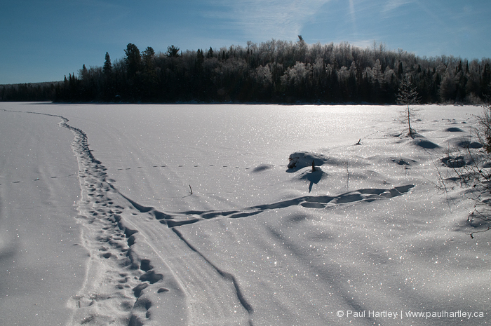high contrast path in snow on lake ice ontario