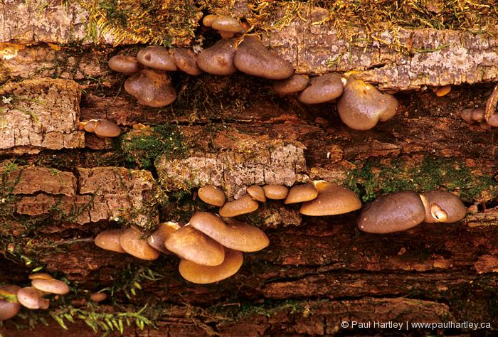 fungi on fallen tree trunk