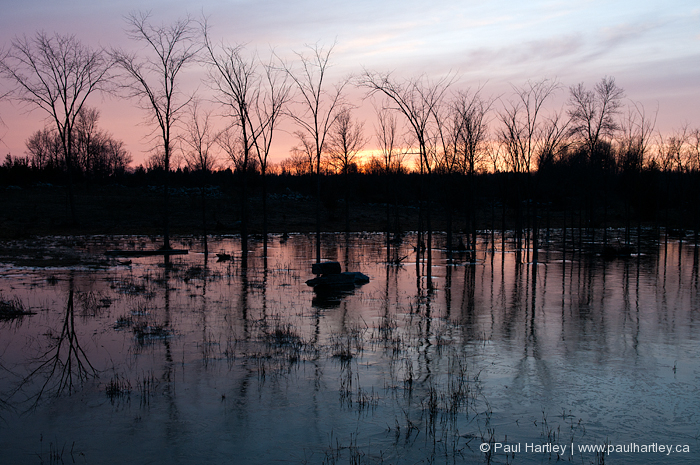 reflection of sunset and bare trees on ice