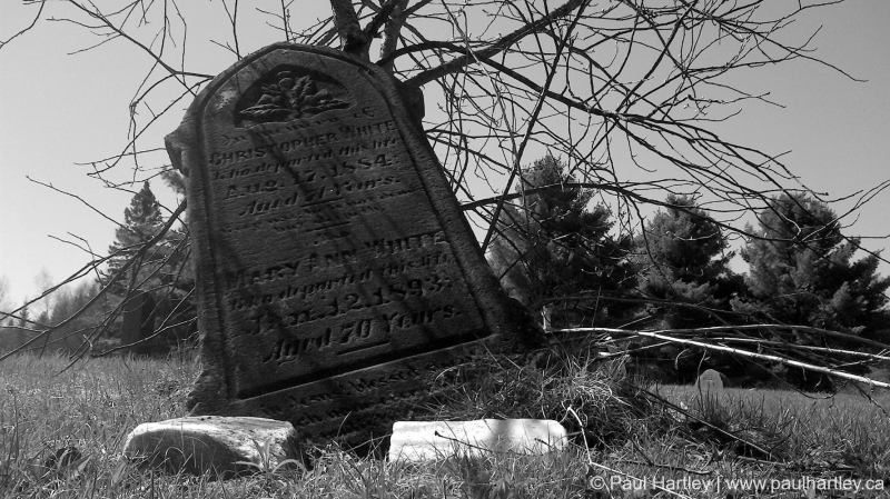 grave stone leaning on branches
