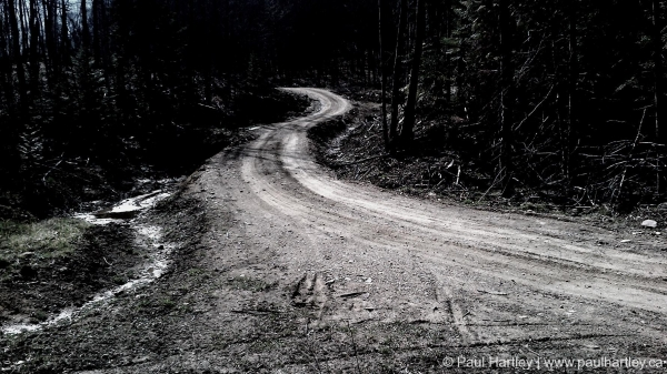 high contrast gravel road into forest