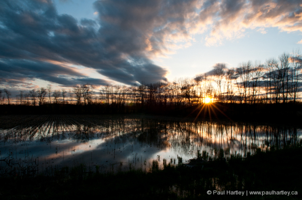 sunset with reflection flooded field