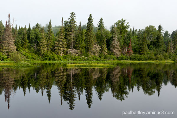 reflection near algonquin park ontario
