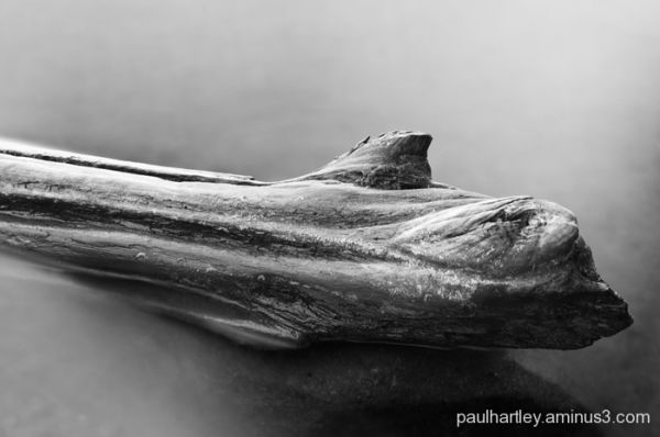 driftwood in water