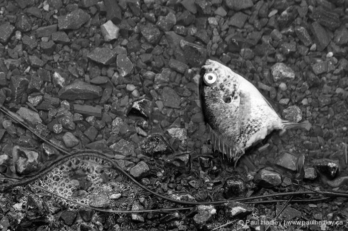fish head on shoreline