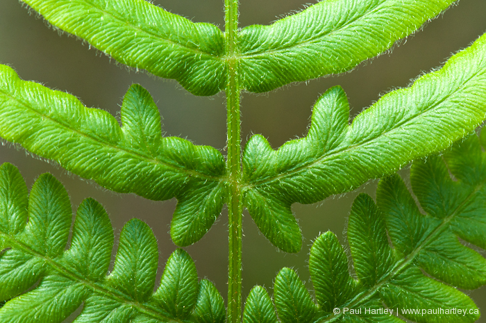 close up of fern stem and leaves