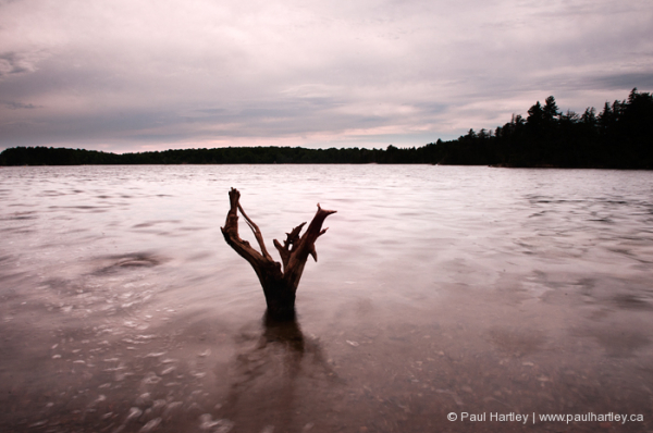 standing drift wood in eels lake