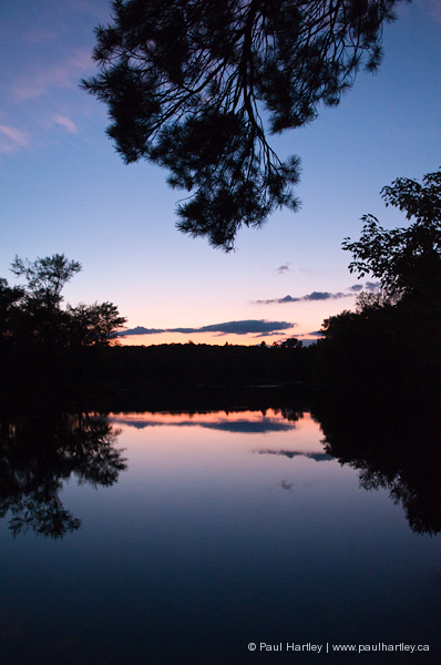 waterscape with pine tree branch
