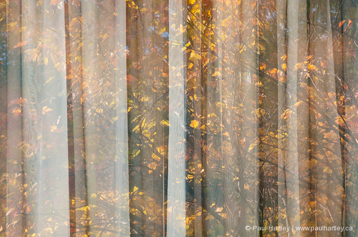 autumn through the curtains